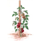 Palice na paradajky